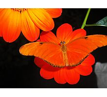 Orange Double Photographic Print