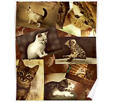 Cute Kittens at play - Collage Poster