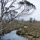 Tasmanian bush vista by Cradle Mt by gaylene