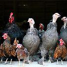 The Barnyard Family by Lori Deiter