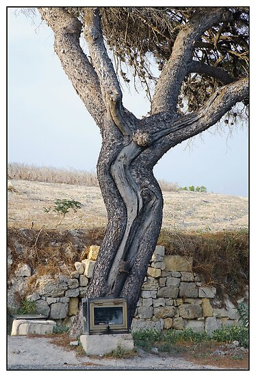 The Cruciform Tree by PhotoArtBy Astrid