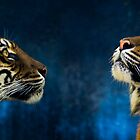 Sumatran tigers by Sheila  Smart