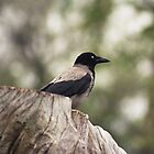 Hooded Crow by Robert Burton