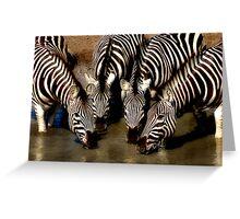 Thirsty Zebra Greeting Card
