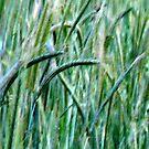 sea of grass by bodymechanic