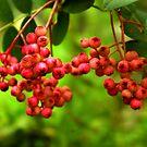 Berries by Trevor Kersley