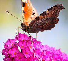 Butterfly by mattbiggs