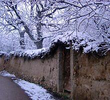 Winter in Shiraz, Iran by mojgan