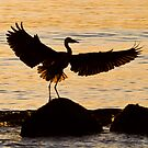 Heron In Dawn Light by David Friederich