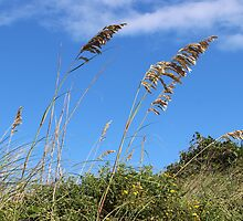 Sea oat by Forget-me-not