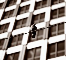 Bird on a wire by Rosina  Lamberti