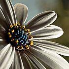 Flowers by Ryan Carter