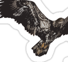 Isolated American Bald Eagles-1  Sticker
