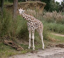 Baby Riticulated Giraffe by LindaMac