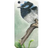 """Blue Wren"" iPhone Case/Skin"