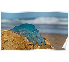 Blue Jellyfish 02 Poster