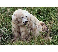Going up to Alaska Photographic Print