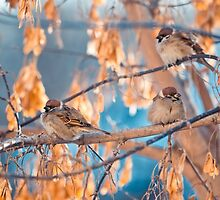 great sparrows in winter time on a branch by Oksana Ariskina