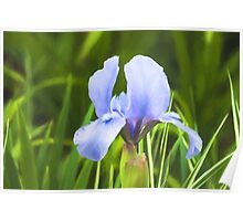 Pale Purple Iris - Impressions Of Spring Poster