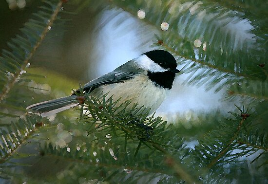 Chickadee Watercolor by Renee Dawson