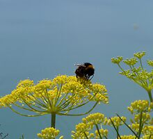 Focus on a bumble bee by missboon