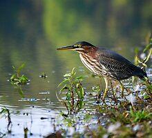 Lake Bird fishing for lunch by LjMaxx