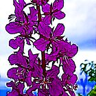 Fireweed by Francine Dufour Jones
