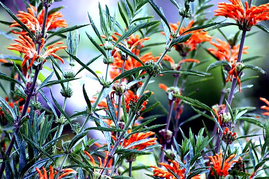 Incredible Orange Flowers by Laurie Puglia