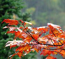 Autumn Rain by Gotcha  Photography