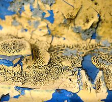 Blue and Yellow Paint by rdshaw