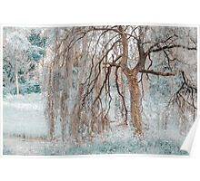 Secret Life of the Willow Tree. Nature in Alien Skin Poster