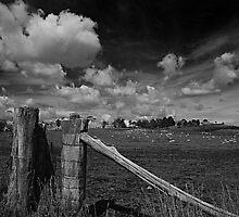 Fences by K Futol