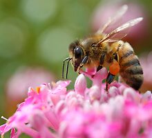 Bee Brave by Rhana Griffin