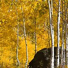 Colorado Fall by bluerabbit
