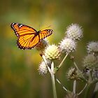 Spread Your Wings & Fly My Pretty Butterfly by Curtiss Simpson