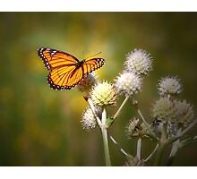 Spread Your Wings & Fly My Pretty Butterfly Photographic Print