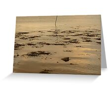 Ripples In The Evening Sun Greeting Card