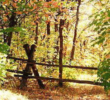 Autumn Fenced In by jansnow