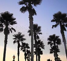 "Palm Skies by Lenora ""Slinky"" Regan"