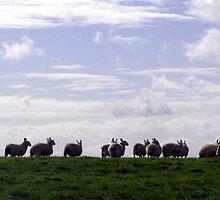Flock by Caroline Anderson