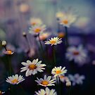 Urban daisies, Tokyo, Japan by Alfie Goodrich