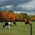 Autumn Storms by Cheri Perry