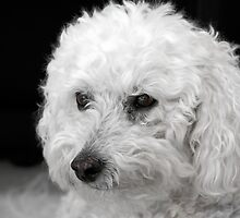 Hercules! A Great Name for a Small Dog by Christine Till  @    CT-Graphics