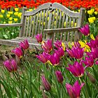 Spring Bench by Marilyn Cornwell