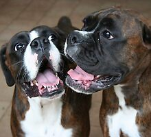 Luthien & Arwen -Boxer Dogs Series- by Evita