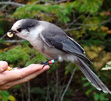 A Bird in the Hand by Gotcha  Photography