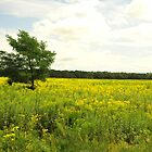 FIELD OF GOLDENROD by SharonAHenson