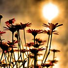 Silhouetted Flowers by jonnikray