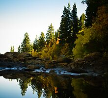Natures Reflection by Nick  Cardona