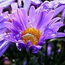 Flower Cup Tea by lareejc